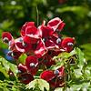 2017_ seed pods_ St Vincent Botanical Garden_IMG_8575