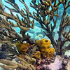 2017_ sponges at Petit Tabac_Grenadines_IMG_1669 col_cor
