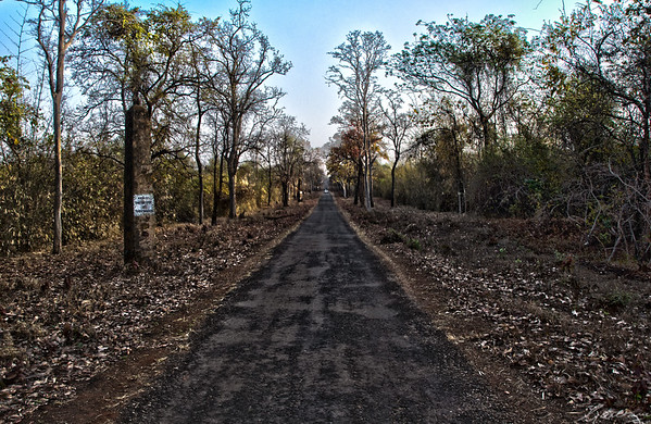 Road to Tadoba | Tadoba, April 2012