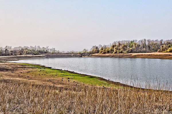 Telia Lake | Tadoba, April 2012
