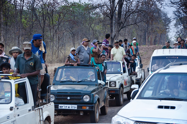 Traffic jams, Tadoba Tadoba, April 2012