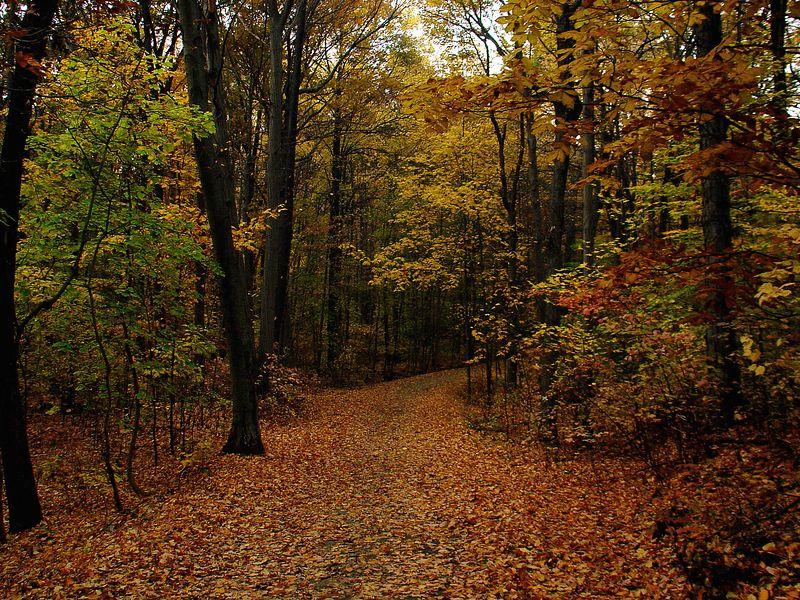 Fall Foliage - November 2005