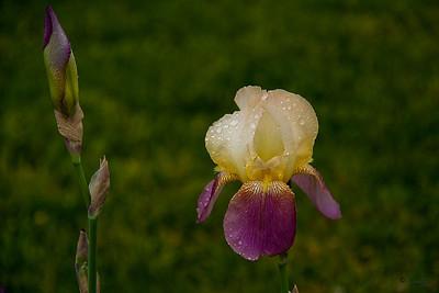 20090502_Flowers_IMG_3972