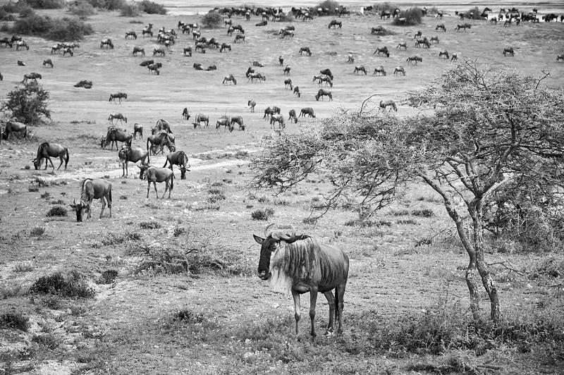 Safarie Tanzania 2014