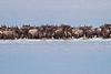Wildebeest in lake, Lake Ndutu, Serengeti, Tanzania, Africa