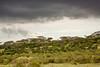 Storm clouds, Serengeti, Tanzania, Africa