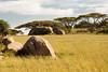 Kopjes, Serengeti, Tanzania, Africa