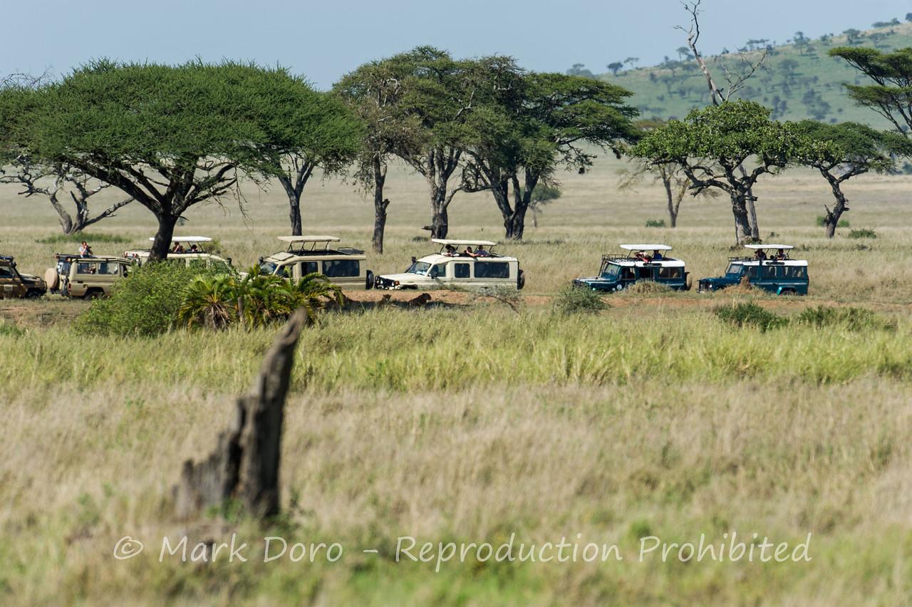 Safari vehicles watching a pride of lion, Serengeti, Tanzania