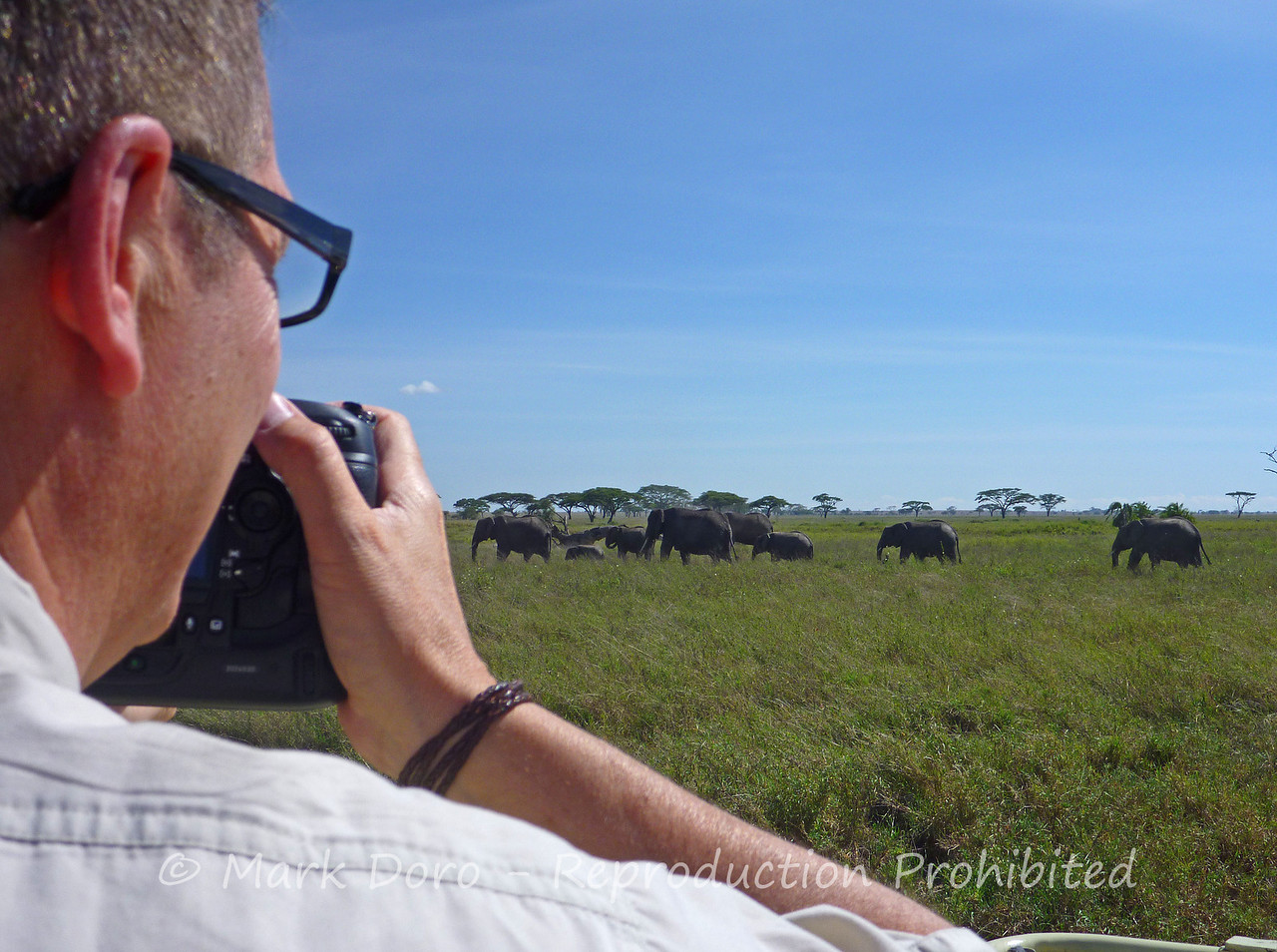 Mark photographing African Elephant, Serengeti, Tanzania