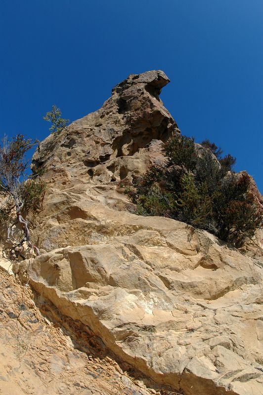 At skull rock, this formation looks more like an eagle (taken with a fisheye lens).