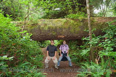 Father and Daughter carrying a giant Tree - Old-growth Rainforest in Pacific Rim National Park, Vancouver Island, British Columbia, Canada
