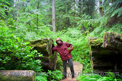 Young Woman with Arm in hollow Tree - Temperate Rainforest, Pacific Rim National Park, Vancouver Island, British Columbia, Canada