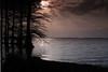 Reelfoot Lake, West TN morning