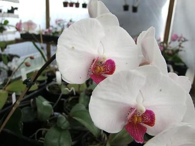 Terri's Orchids