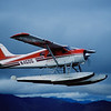 Beaver_in_Flight