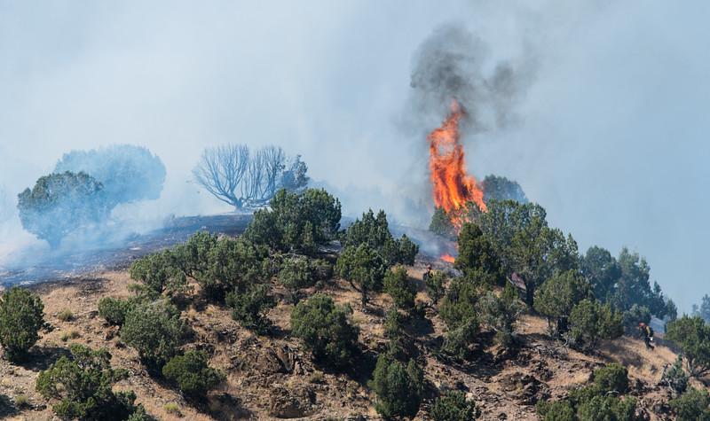 Juniper Tree Exploding
