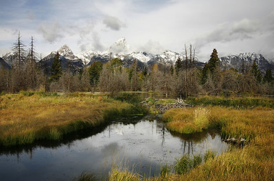 tetons and beaver pond