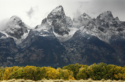 tetons and cottonwood