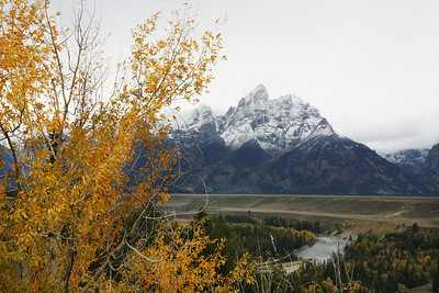 tetons and aspen