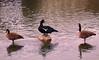 Toogood Pond, Unionville