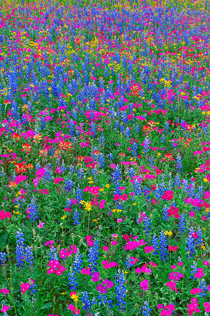 A Mix of Wildflowers with Cool Colors