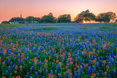 Church and Sunset with Beautiful Texas Bluebonnets and Wildflowers