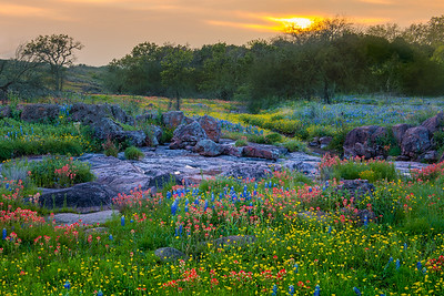 Hill Country Rocky Creek and Wildflowers