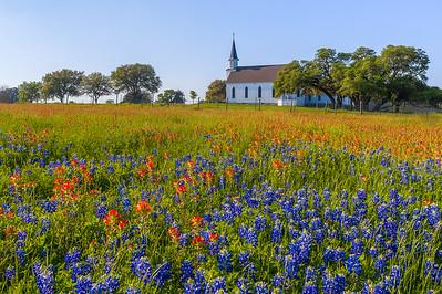 Washington County Church with Texas Wildflowers