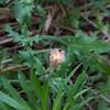 TRW_20120506_IMG_2344