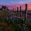 Twilight in the Hill Country