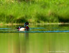 Wood Duck -Male