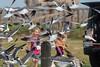 Feeding the Laughing Gulls