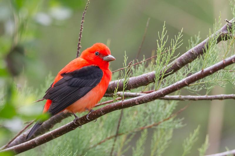 Annual Birds