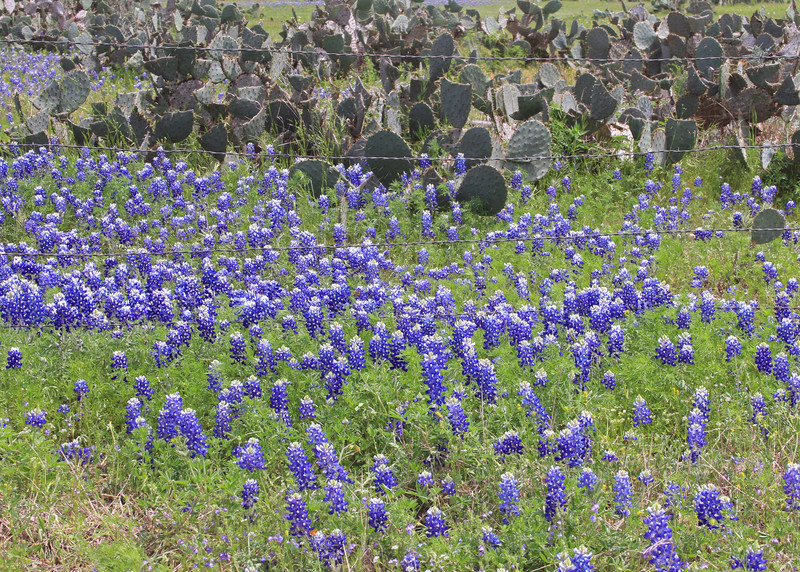 Texas Nature
