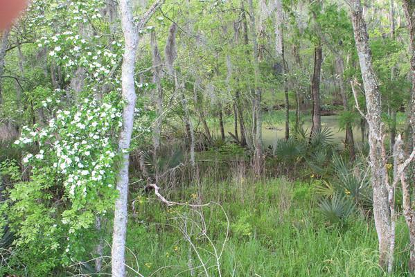 2010 04 03 -  BBSP  Elm Lake 4