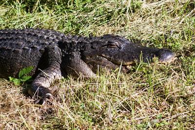 Brazos Bend State Park - 07 April 2012