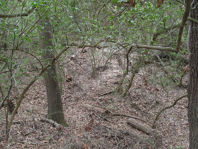 Edith L Moore Nature Sanctuary:  Typical undergrowth.  Great for Chuck Wills Widow.