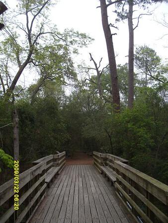 Edith L Moore Nature Sanctuary:  The bridge over the Bayou