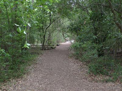 Edith L Moore Nature Sanctuary:  The main trail