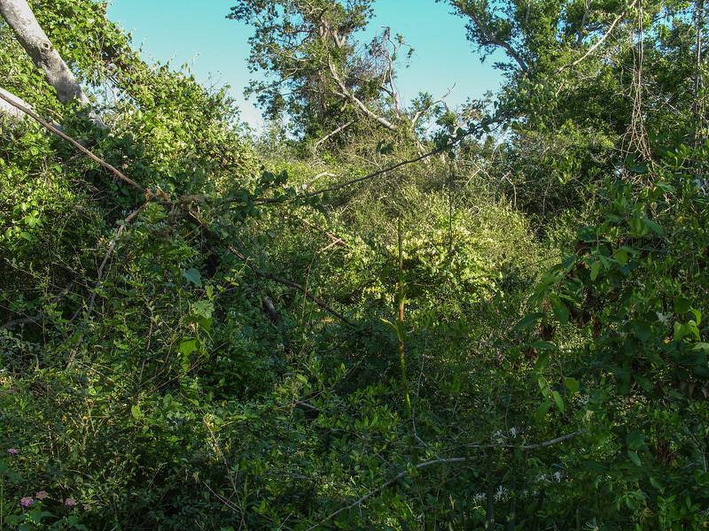 High Island (Boy Scout Woods)