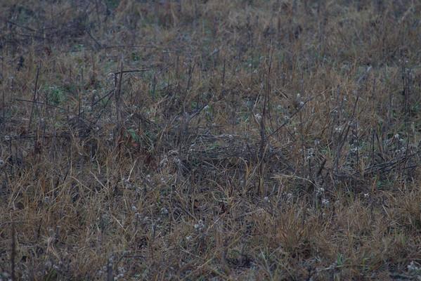 A close up of the habitat