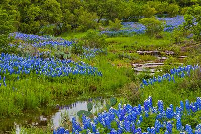 Serene Creek and Bluebonnets