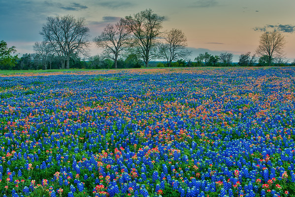 Dusk and Wildflowers