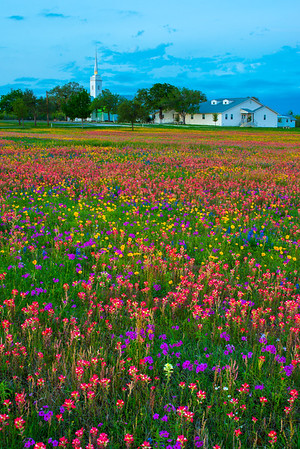 Church and Wildflowers at Dusk