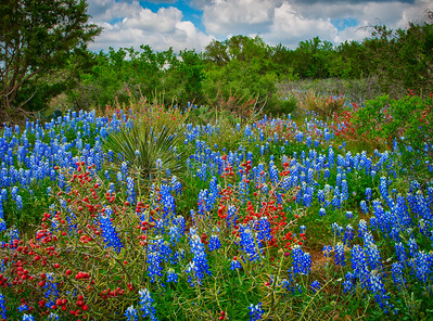 Reds and Blues in the Hill Country
