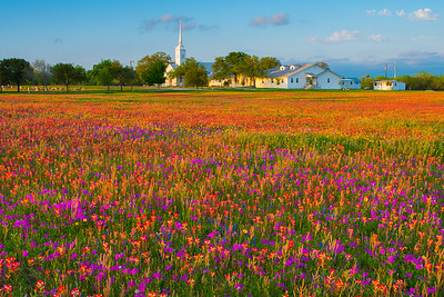 Church and Wildflowers in Late Afternoon