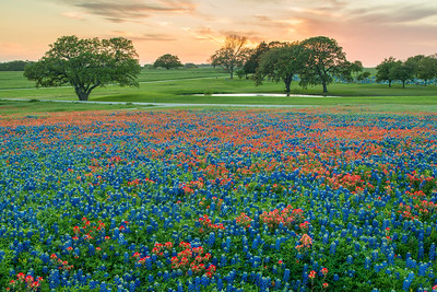Texas Wildflower Sunset