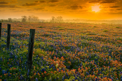 Sunrise, Wildflowers, and Fence Posts