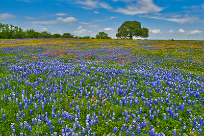 Spring Field of Wildflowers