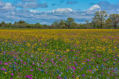 Sunny field of flowers